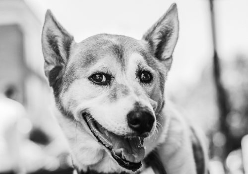 Best Top Pet Photographer in Washington DC